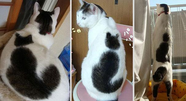 cat-markings-4-2