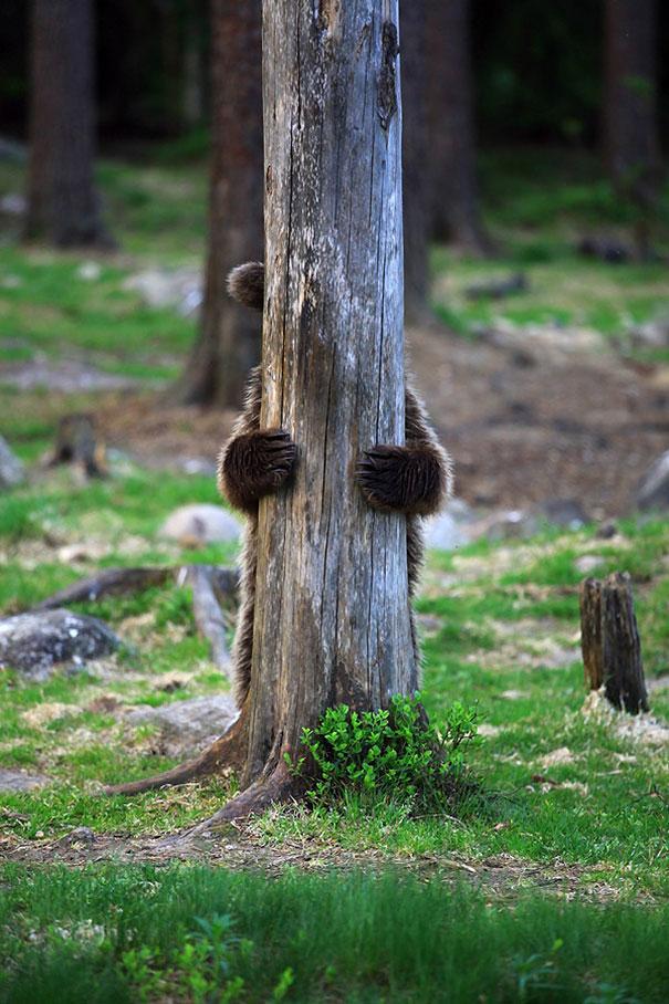 funny-bears-doing-human-things-16