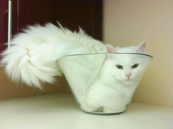 funny-liquid-cats-2
