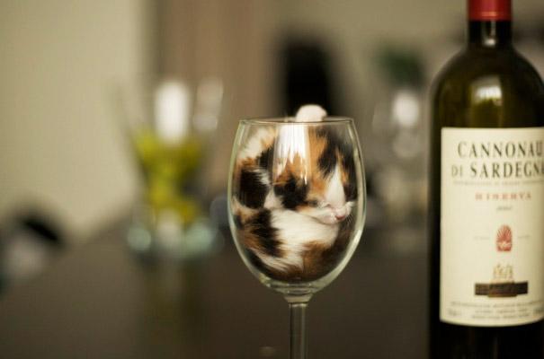 funny-liquid-cats-3