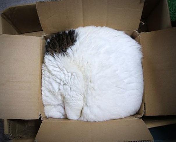 funny-liquid-cats-9