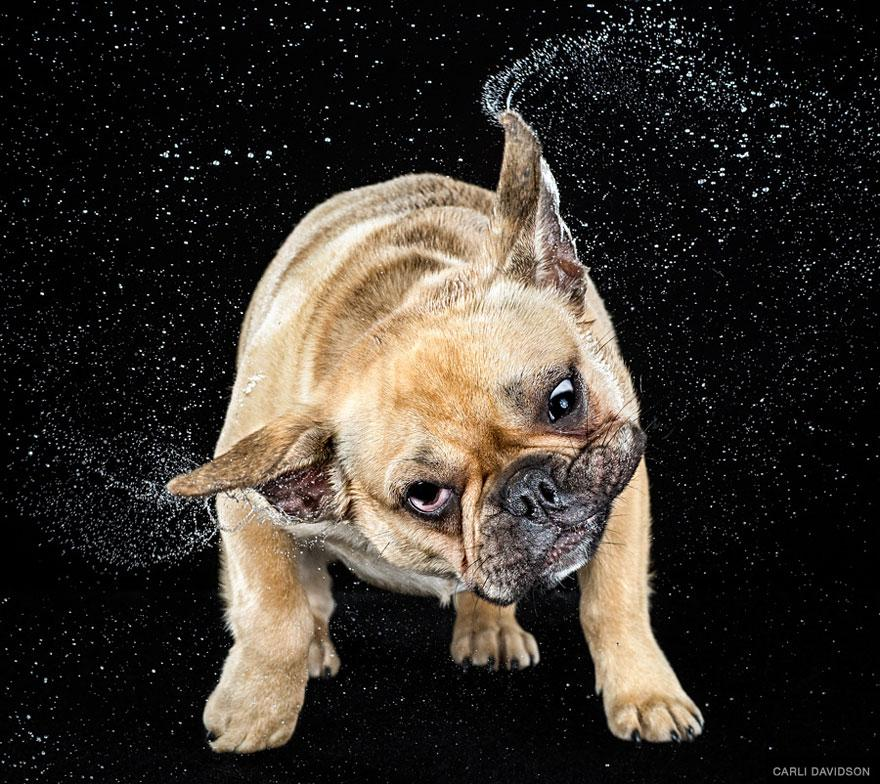 shake-dog-photography-carli-davidson-9