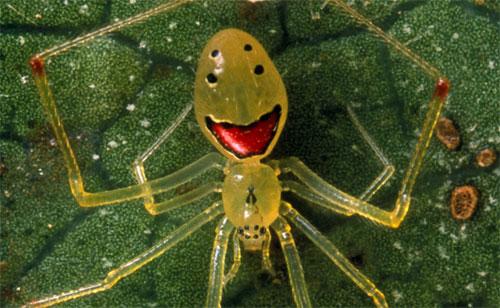 icky_spider