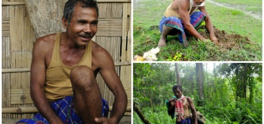jadav-payeng-collage